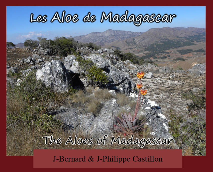 Les aloe de madagascar the aloes of madagascar for Le site booking