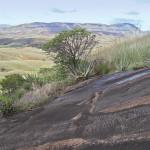 La fin du Tampoketsa d'Ankazobe, sur la route de Majunga