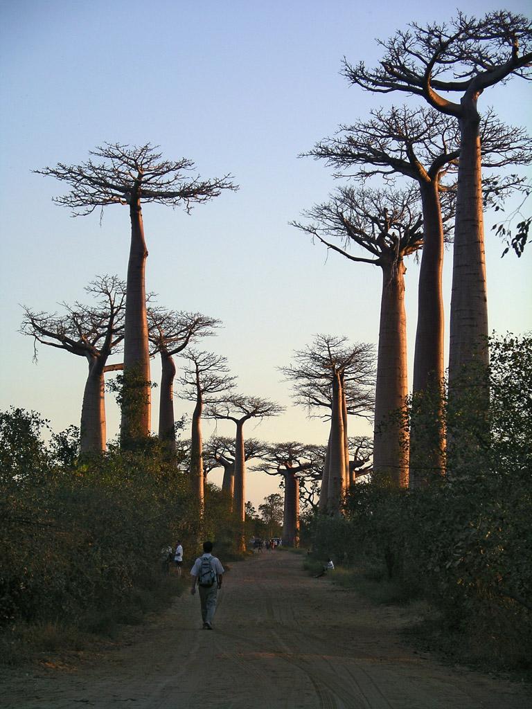 Baobab waolk, near Morondava